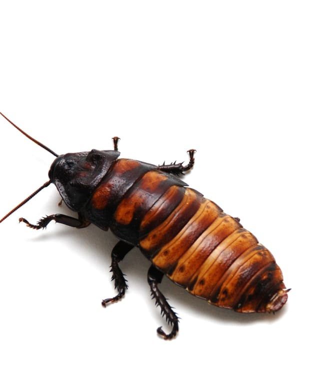 just-one-word-of-praise-for-the-cockroach