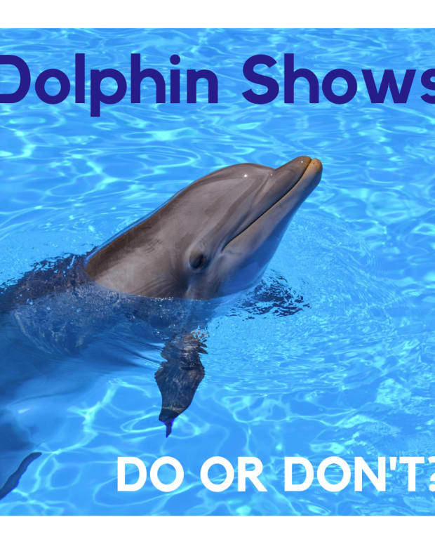 rethink-the-dolphin-showdont-buy-the-ticket