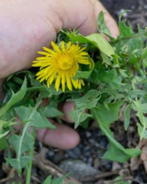 our-spiritual-weeds