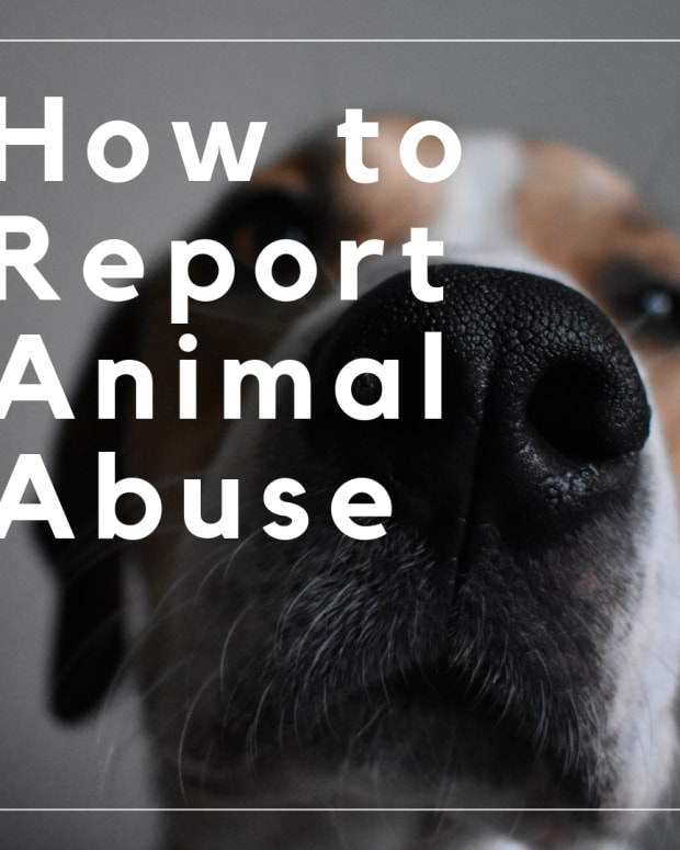 what-to-do-if-you-think-an-animal-or-dog-is-being-abused