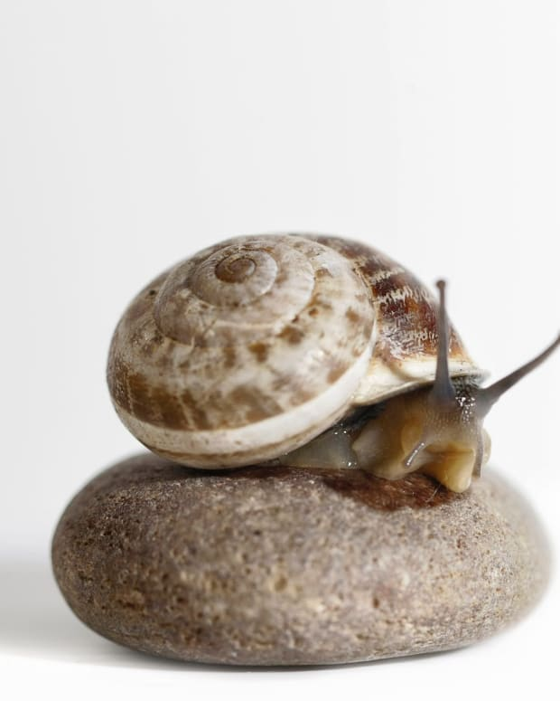 showing-pity-for-the-snail