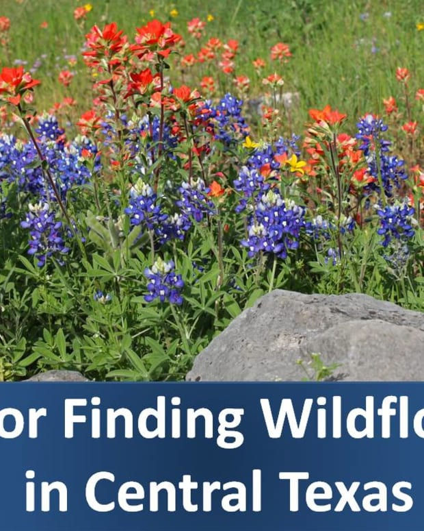 tips-for-taking-bluebonnet-wildflower-drives-near-san-antonio-and-austin-texas