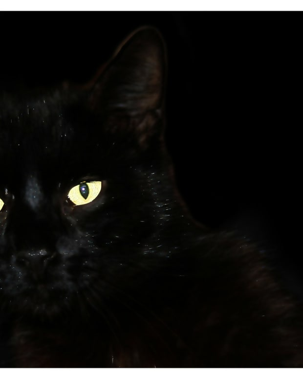 the-black-cat-a-poem