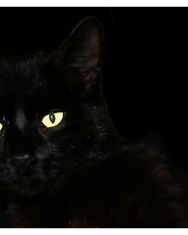 the-black-cat-a-poem