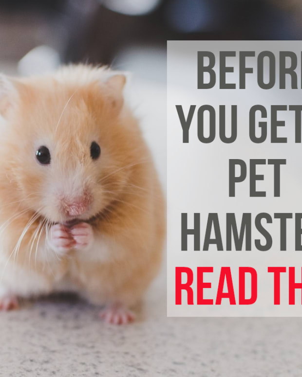 reasons-not-to-have-a-pet-hamster