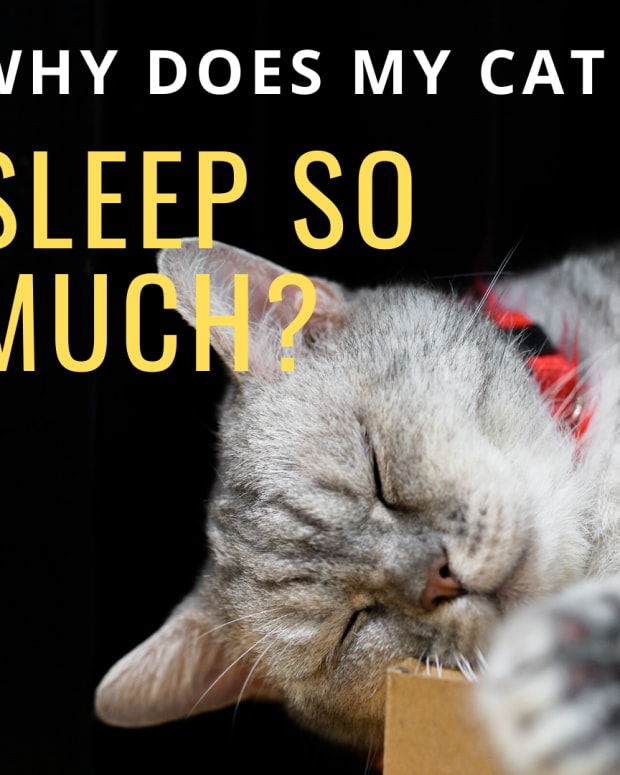 why-do-cats-sleep-so-much