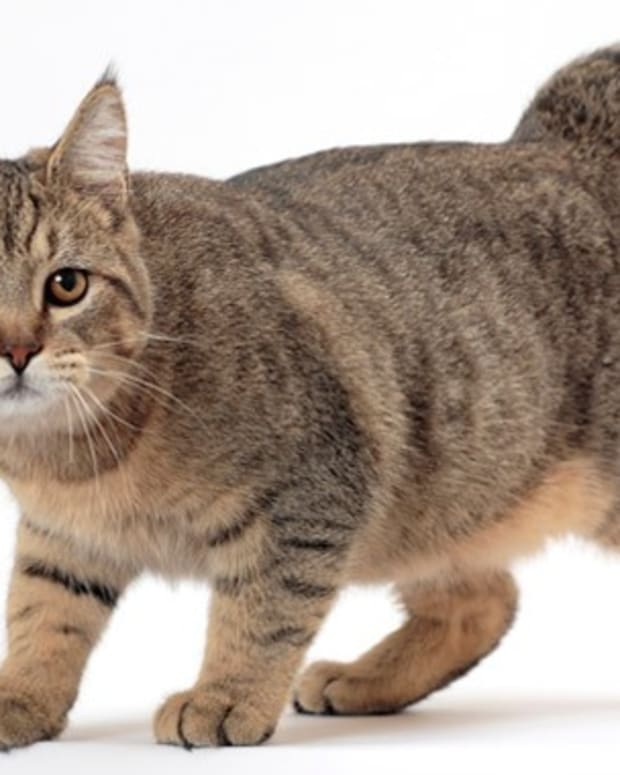 top-10-weirdest-cat-breeds