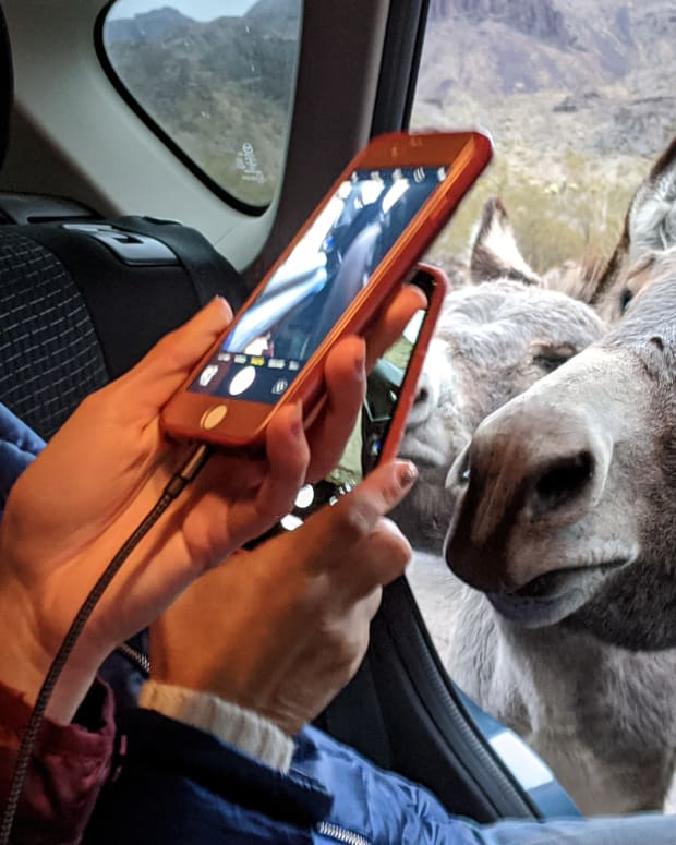 oatman-arizona-and-its-free-roaming-burros