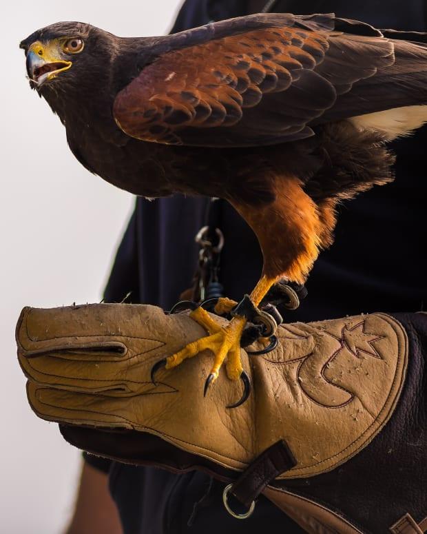 the-eagle-a-metaphor-for-spiritual-growth