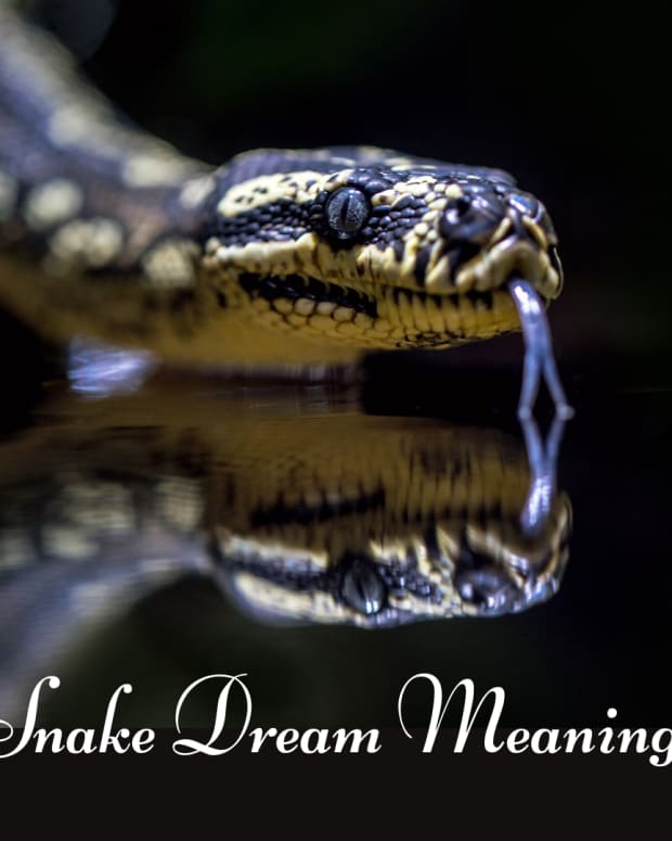 snake-in-the-dream