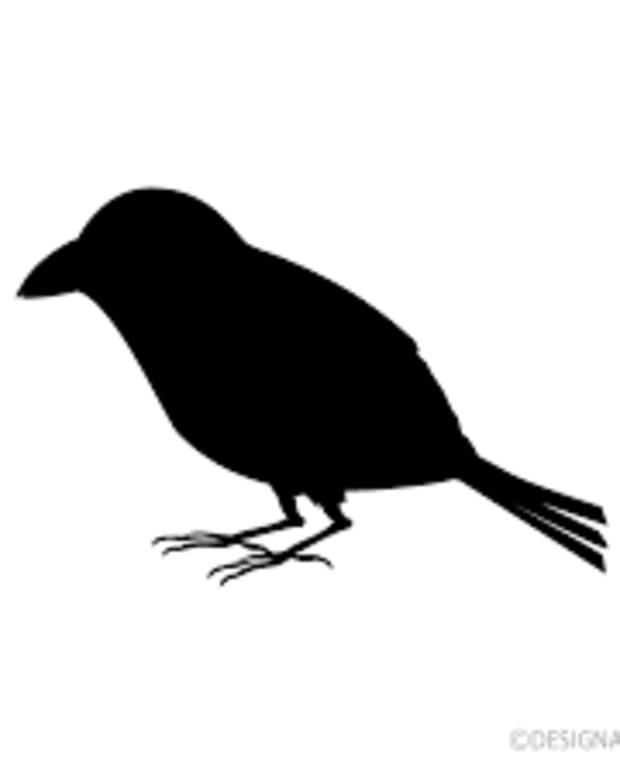 that-bird