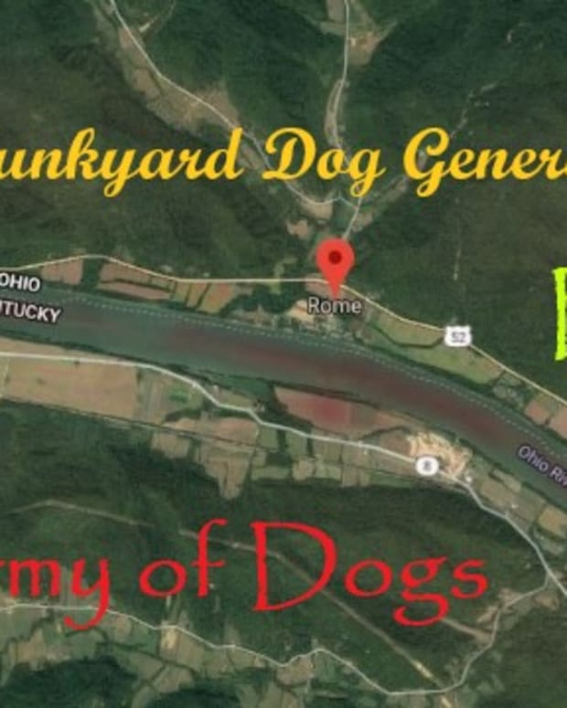 a-junkyard-dog-general-the-army-of-dogs-part-two