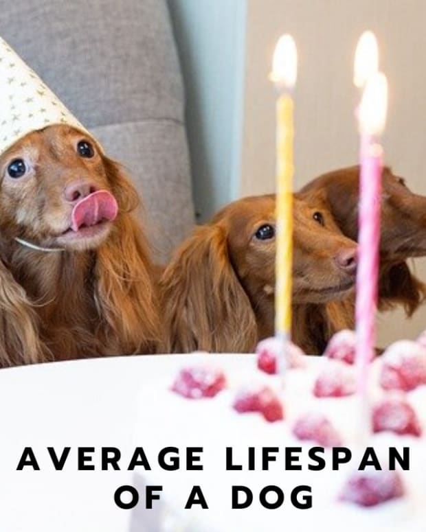 the-average-lifespan-of-a-dog-and-five-scientific-benefits-of-having-a-dog