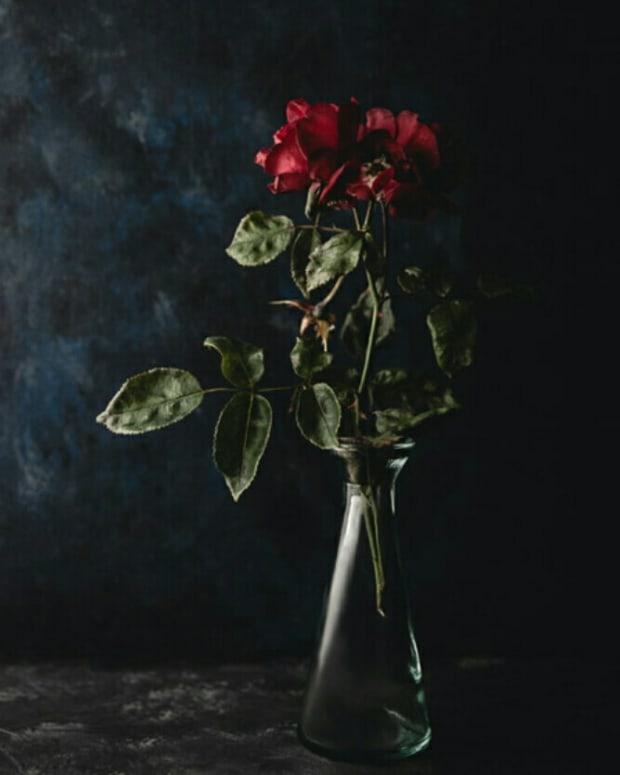 dying-rosebud