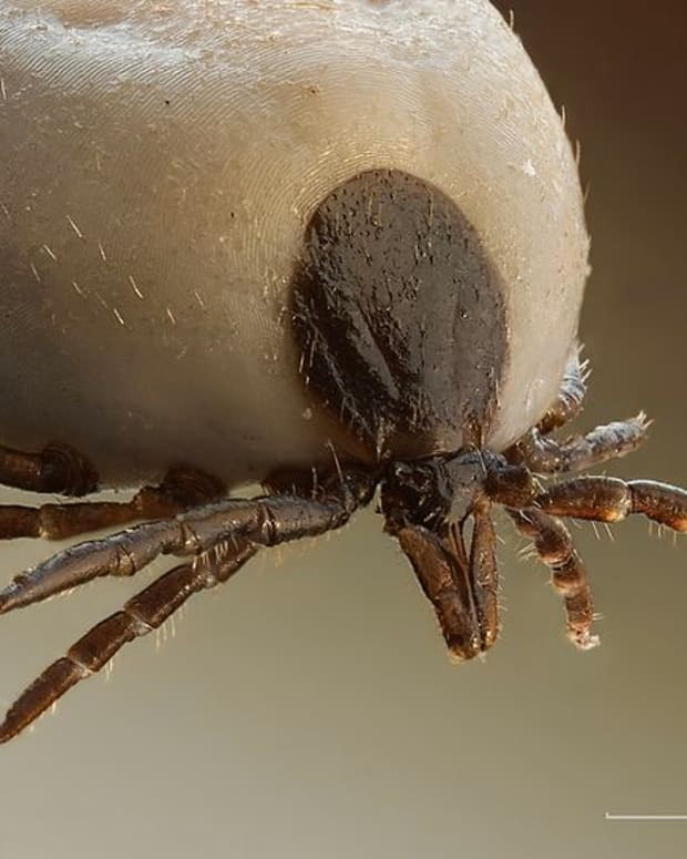 interesting-facts-about-horrible-ticks