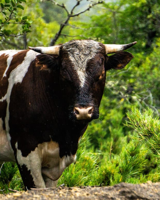 short-story-the-magic-cow-part-2