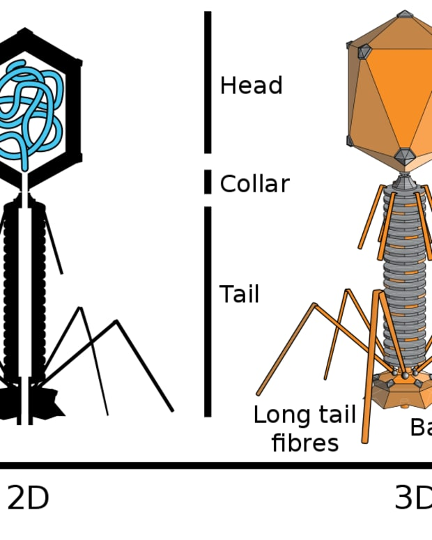 bacteriophages-viruses-that-affect-bacteria-and-human-lives