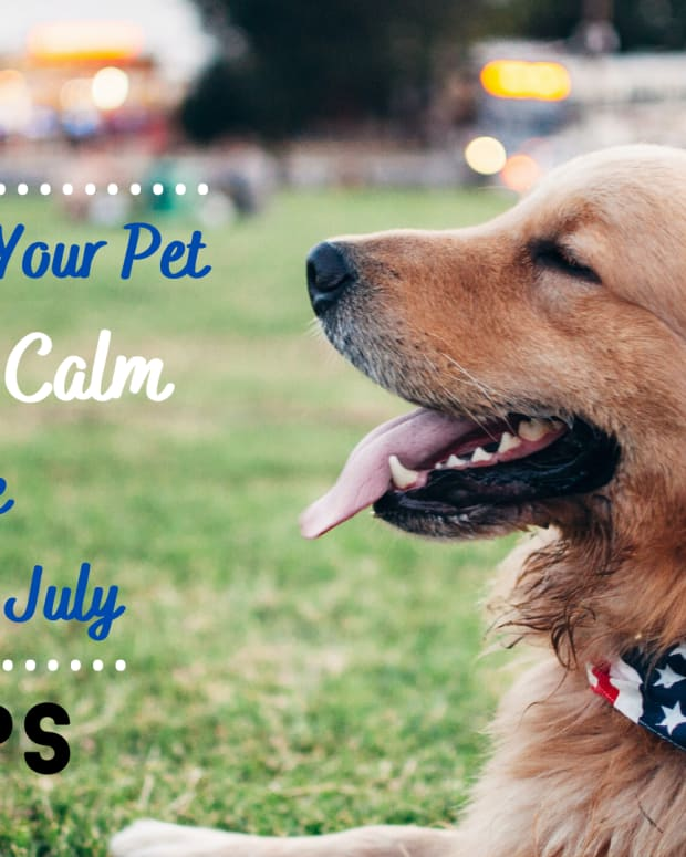 how-to-keep-pets-safe-on-july-4