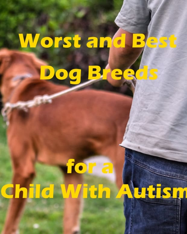 dogs-for-the-autism-spectrum