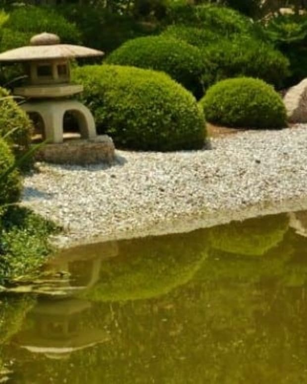 japanese-tea-garden-in-houston-texas-serenity-in-hermann-park