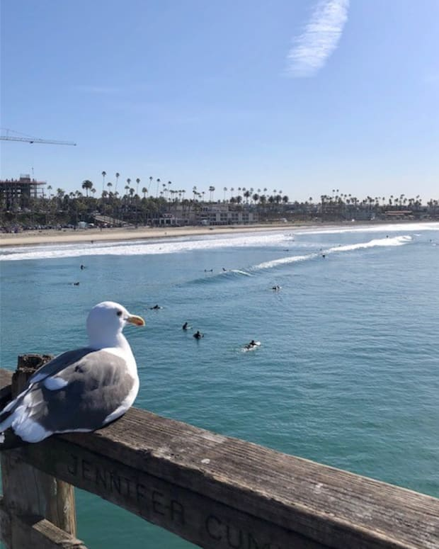 the-gull-of-oceanside-pier