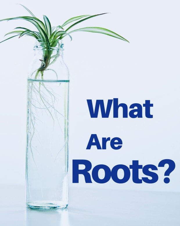 roots-functions-structure-and-uses-to-man