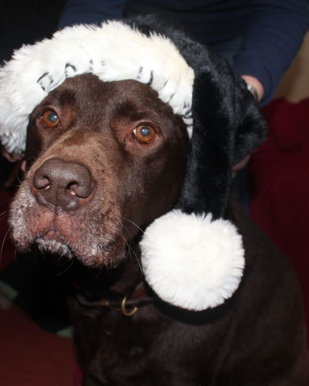 10-reasons-dogs-get-stressed-during-the-holidays