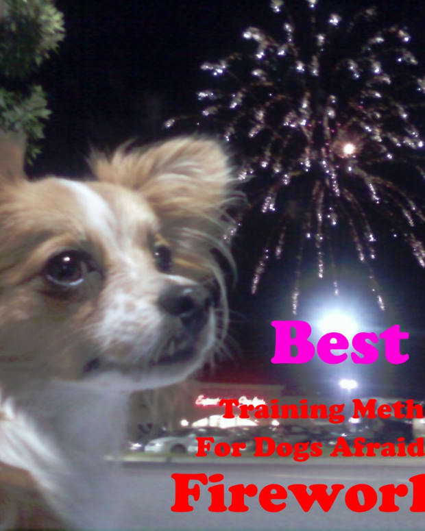 fireworks-and-classical-counterconditioning-your-dog
