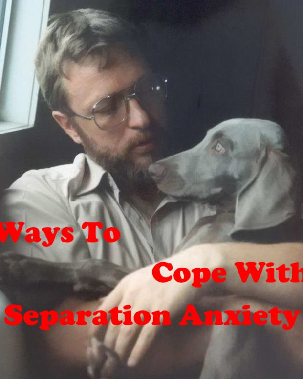 dog-training-tips-separation-anxiety