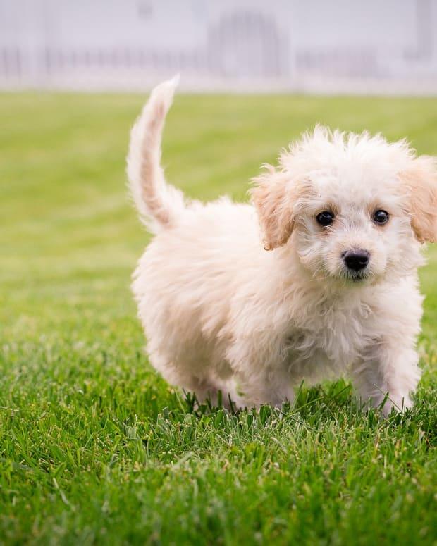 puppy-training-essentials