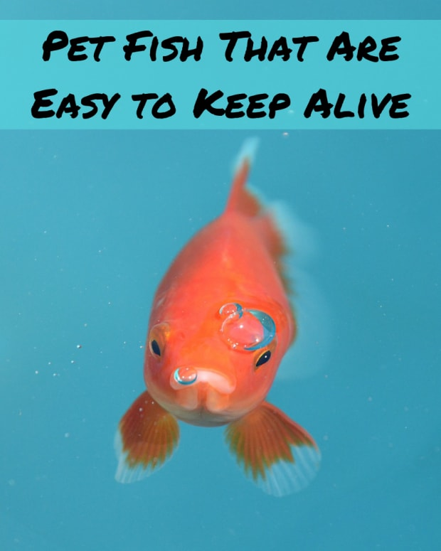 are_there_any_fish_that_dont_die_so_easily