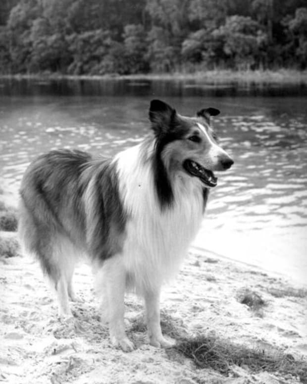 They didn't talk about this on Lassie