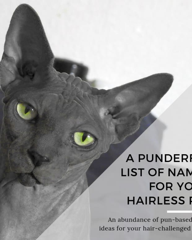 punderful-names-for-furless-pets