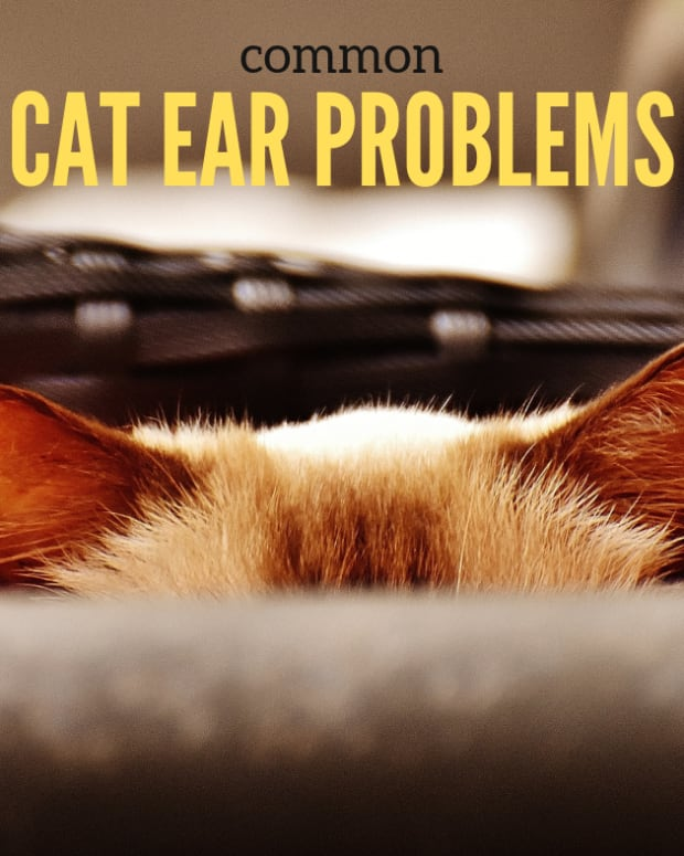 cat-ear-problems