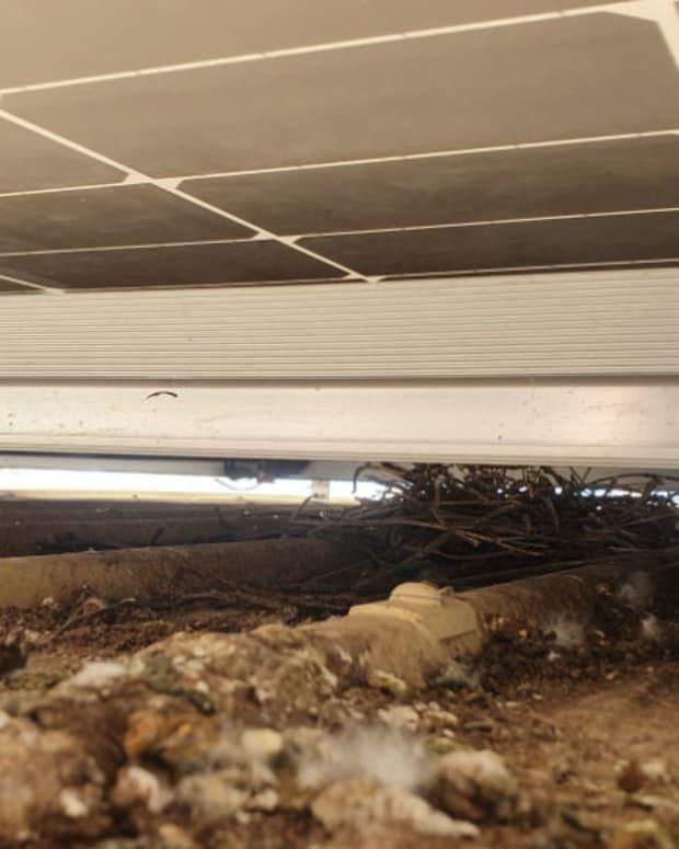 do-solar-panels-attract-birds