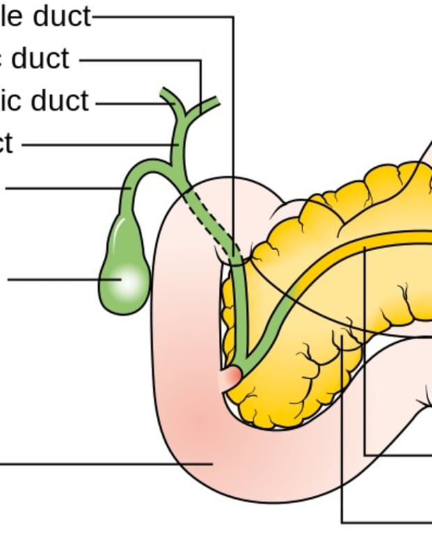 digestive-enzymes-from-the-pancreas-uses-and-interesting-facts