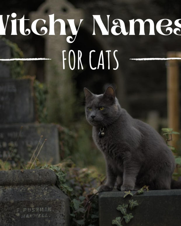witch-names-for-cats-from-history-and-literature