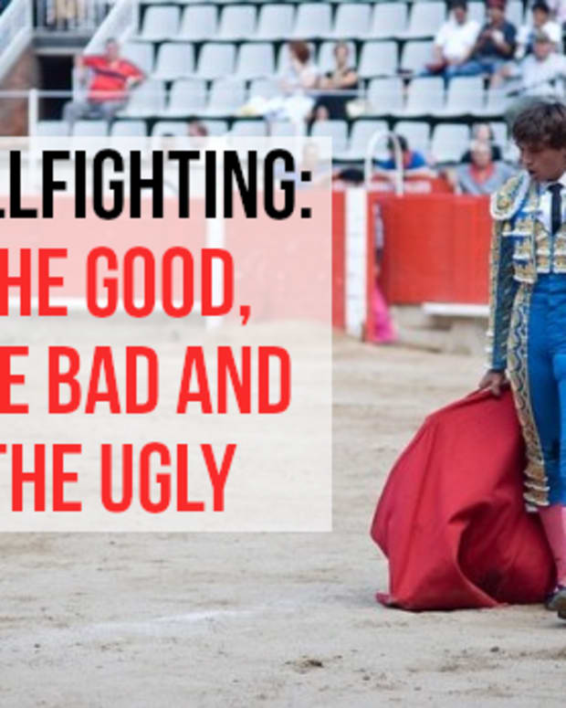 arguments-for-and-against-bullfighting