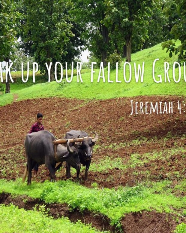 breaking-up-the-fallow-ground-of-your-heart