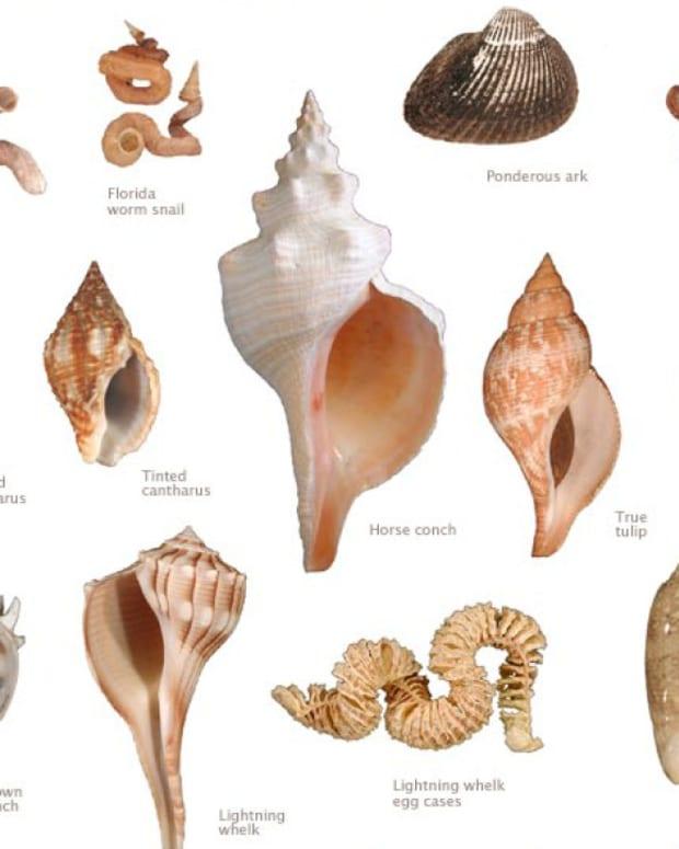 collecting-seashells-in-florida
