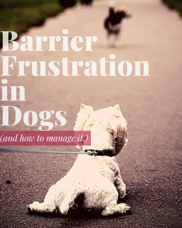 dog-behaviorunderstanding-barrier-frustration-in-dogs