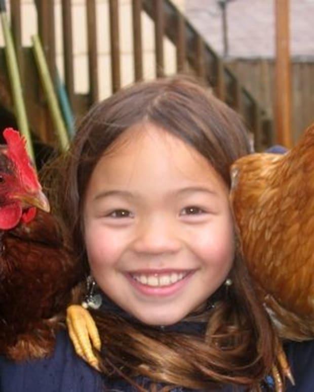 chicken_toys