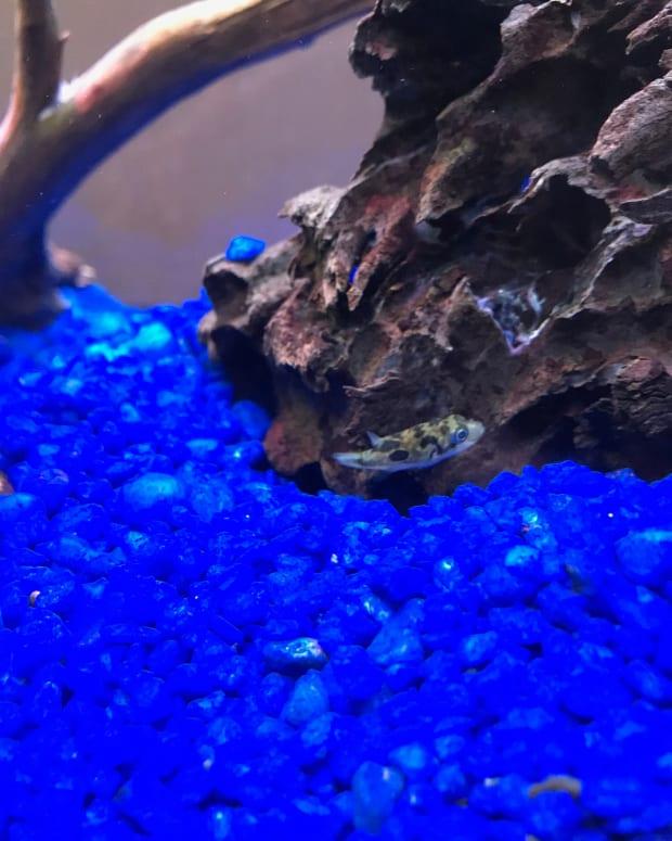 unique-home-aquarium-animals