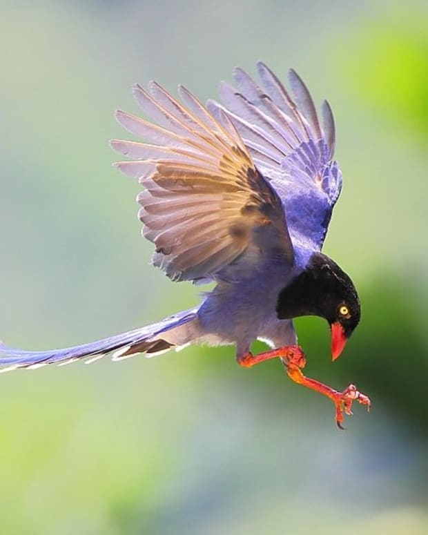 how-to-capture-birds-in-flight-photography-tutorial