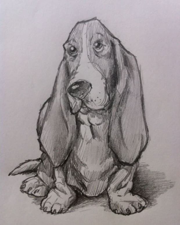 how-to-draw-a-basset-hound-dog