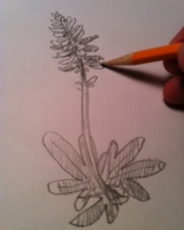 how-to-draw-bluebonnet-flowers