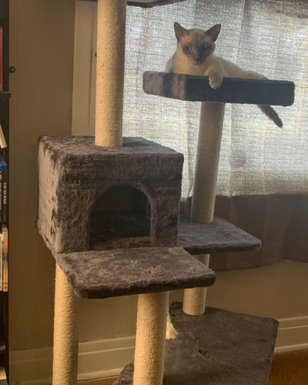 what-to-look-for-when-buying-a-cat-tower