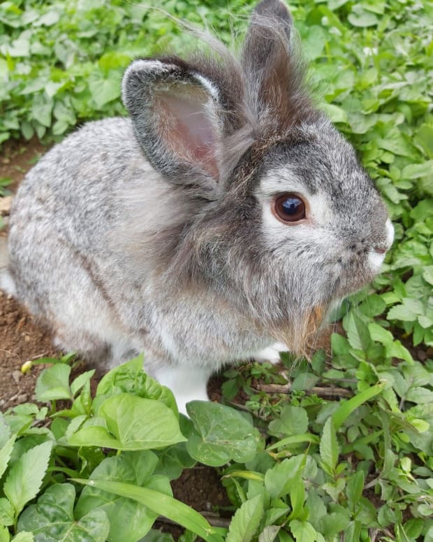 why-bunny-rabbits-make-great-pets