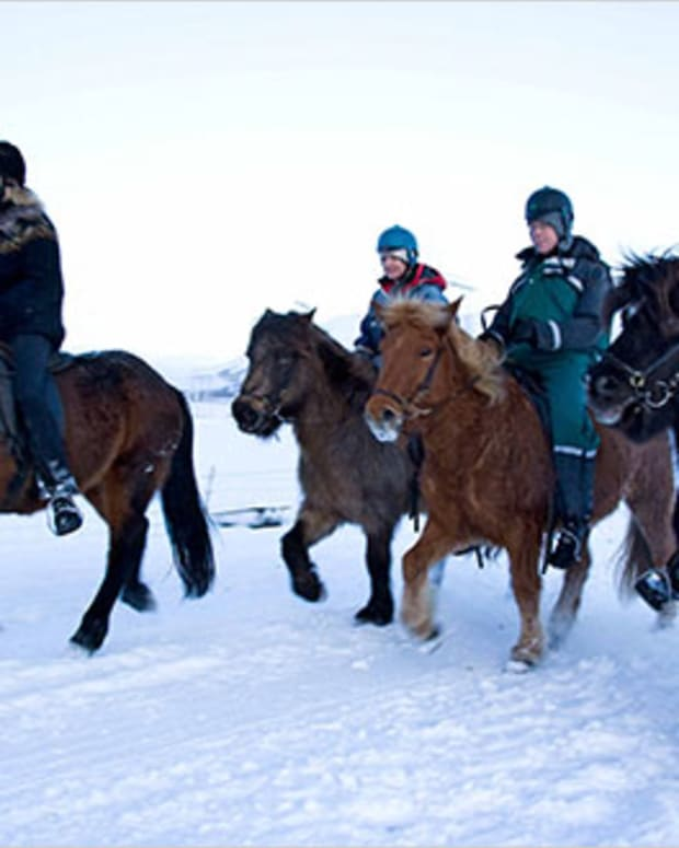 the-icelandic-horse-gift-from-the-vikings