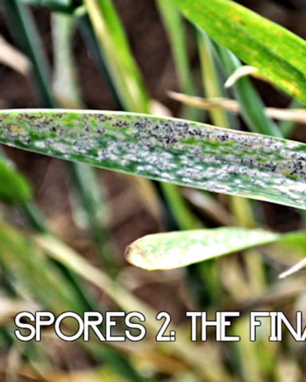 spores-2-the-final-assault-2